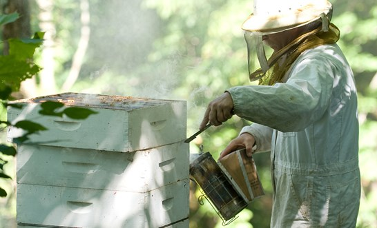 Bee sting death at Tasiliquid Gold beehives farm